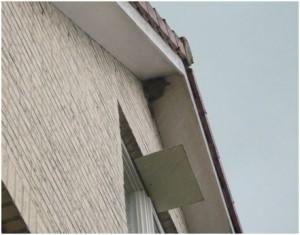 Nest huiszwalus. Foto : Wilfried de Jong.