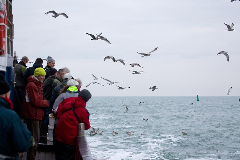 Zeevogeltocht VWG 2015