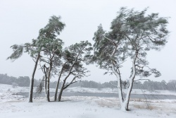 277_Winterstorm_Hatertse vennen_27-12-2014
